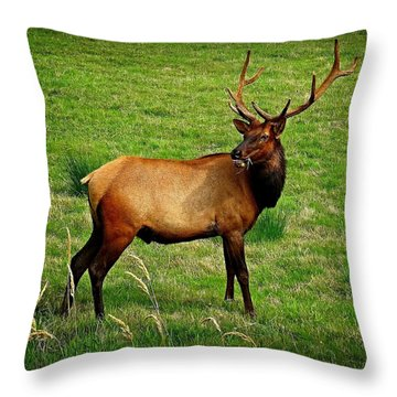 On Alert Throw Pillow by Nick Kloepping