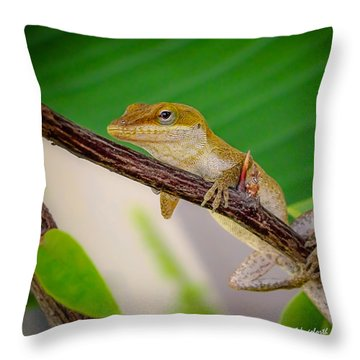 Throw Pillow featuring the photograph On Guard Squared by TK Goforth