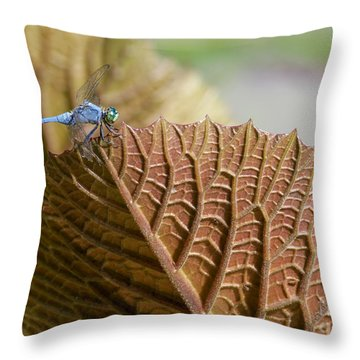 On The Edge Throw Pillow by Sabrina L Ryan