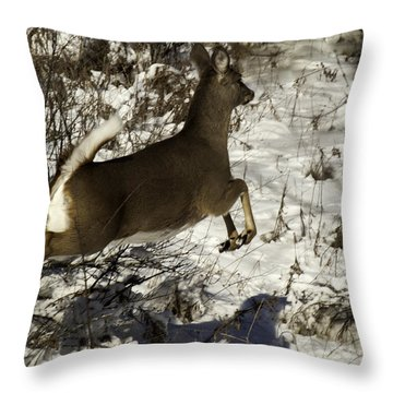 On The Fly  Throw Pillow by Thomas Young