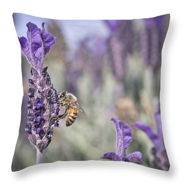 Throw Pillow featuring the photograph On The Lavender  by Priya Ghose