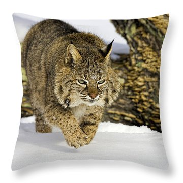 On The Prowl Throw Pillow by Jack Milchanowski