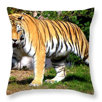 On The Prowl Throw Pillow by Jodi Terracina
