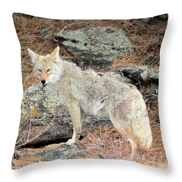 On The Prowl Throw Pillow by Shane Bechler