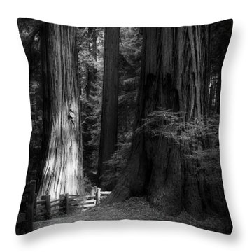 On The Trail At Sunrise Throw Pillow