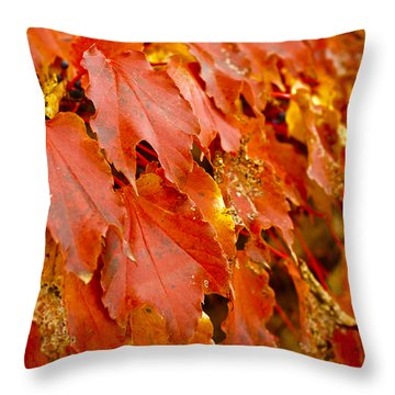 On The Wall Throw Pillow by Christi Kraft