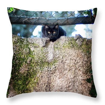 Throw Pillow featuring the photograph On The Wall by Laura Melis