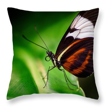 On The Wings Of Beauty Throw Pillow
