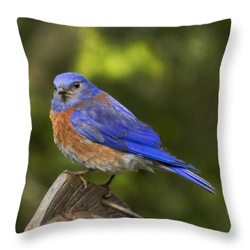 On Top Of The World Throw Pillow by Jean Noren
