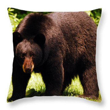 One Big Bad Momma Throw Pillow by Lori Tambakis