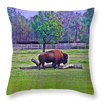 One Bison Family Throw Pillow