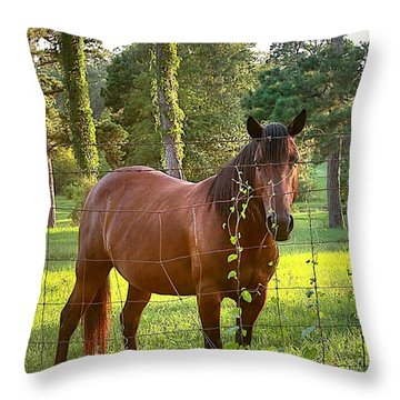 One Brown Horse Throw Pillow