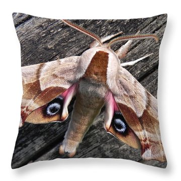 One-eyed Sphinx Throw Pillow by Cheryl Hoyle