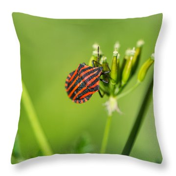 One More Bottle Doesn't Hurt - Square - Featured 3 Throw Pillow by Alexander Senin