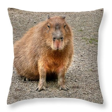 One Very Big Indifferent Rodent-the Capybara Throw Pillow by Eti Reid