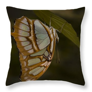 Opal Throw Pillow by Penny Lisowski