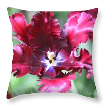 Opened Tulip Throw Pillow by Kathleen Struckle