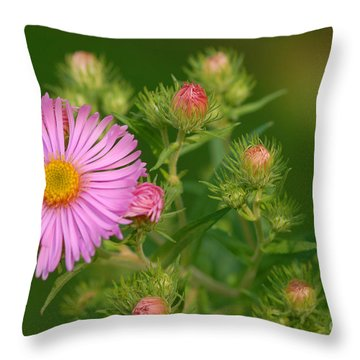 Opening Throw Pillow by Alana Ranney