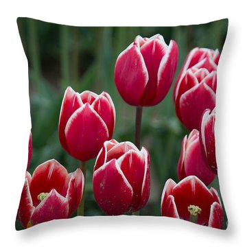 Opening  Throw Pillow by Patricia Babbitt