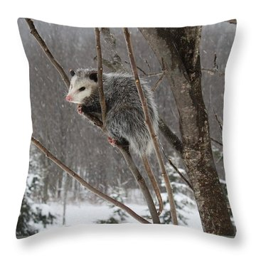 Opossum In A Tree Throw Pillow by Lucinda VanVleck