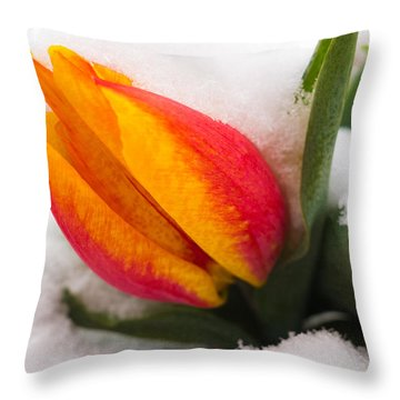 Orange And Red Tulip In The Snow Throw Pillow by Matthias Hauser