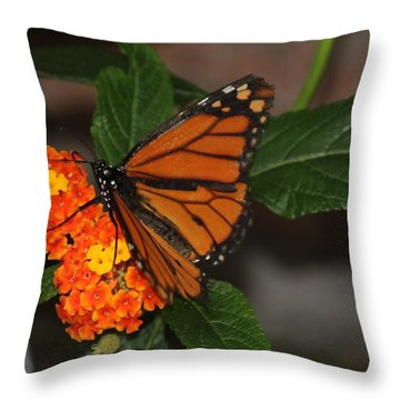 Orange Butterfly On Flowers Throw Pillow