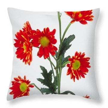 Orange Carnations Throw Pillow