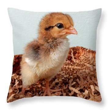 Orange Chick Throw Pillow