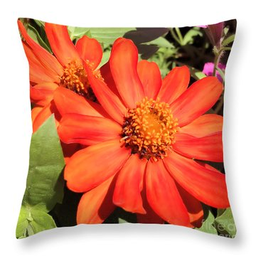 Orange Daisy In Summer Throw Pillow by Luther Fine Art
