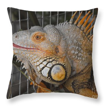 Orange Dragon  Throw Pillow by Erick Schmidt