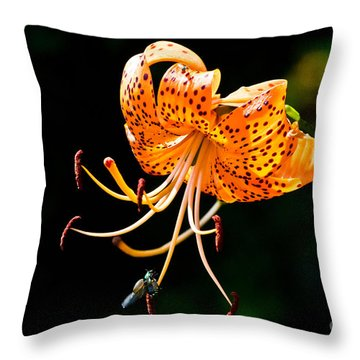 Orange Lily - Lilium Kelleyanum Throw Pillow