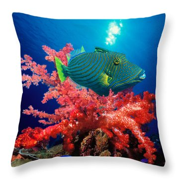 Orange-lined Triggerfish Balistapus Throw Pillow