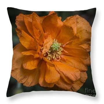 Orange Pop Throw Pillow