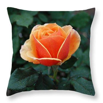 Throw Pillow featuring the photograph Orange Rose by Eva Kaufman