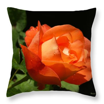 Throw Pillow featuring the photograph Orange Rose by Haleh Mahbod