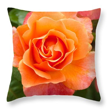 Orange Rose Lillian Throw Pillow