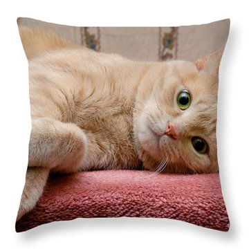 Orange Tabby Cat Lying Down Throw Pillow by Amy Cicconi