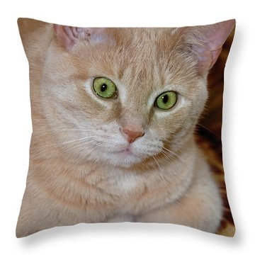 Orange Tabby Cat Poses Royally Throw Pillow by Amy Cicconi