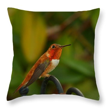 Orange Throated Hummingbird Throw Pillow