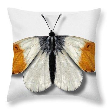 Orange Tip Butterfly - Anthocharis Cardamines Naturalistic Painting - Nettersheim Eifel Throw Pillow