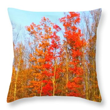 Orange Trees.  Throw Pillow