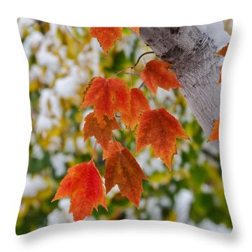Throw Pillow featuring the photograph Orange White And Green by Ronda Kimbrow