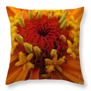 Orange Zinnia. Up Close And Personal Throw Pillow by Ausra Huntington nee Paulauskaite