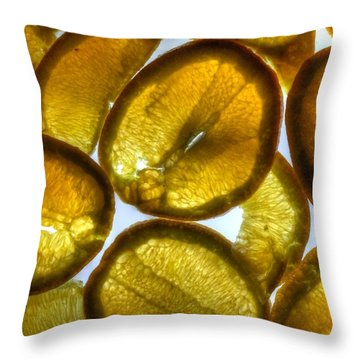 Oranges Throw Pillow by Jane Linders
