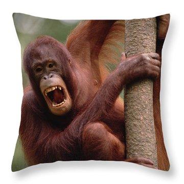 Orangutan Hanging On Tree Throw Pillow by Gerry Ellis