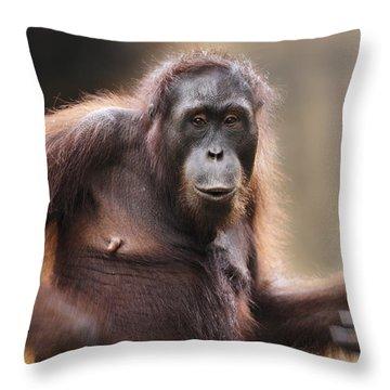 Orangutan Throw Pillow by Richard Garvey-Williams
