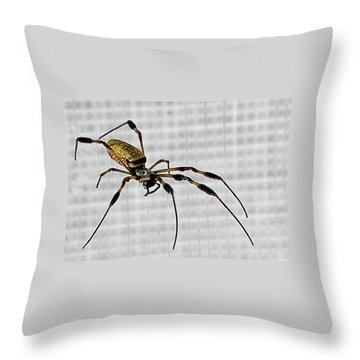 Orb Spider 4 Throw Pillow by Lynn Andrews