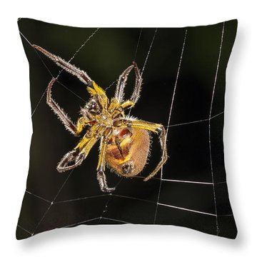 Orb-weaver Spider In Web Panguana Throw Pillow by Konrad Wothe