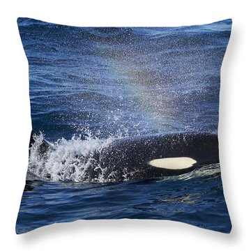 Orca Surfacing Hokkaido Japan Throw Pillow