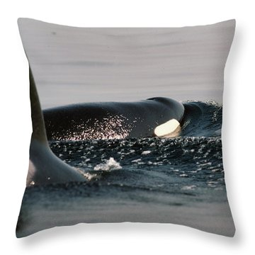 Throw Pillow featuring the photograph Orcas/killer Whales Off The San Juan Islands 1986 by California Views Mr Pat Hathaway Archives